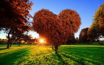 Любовь,heart,tree,Sunset,сердце