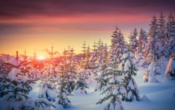 snow,ёлки,winter,Sunset,tree