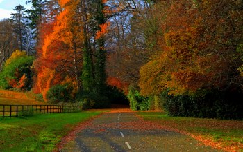 path,fall,colorful,walk,leaves,colors,forest,field,Road,trees,autumn