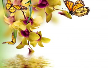 beautiful,Orchid,water,орхидея,butterflies,reflection,spring,yellow