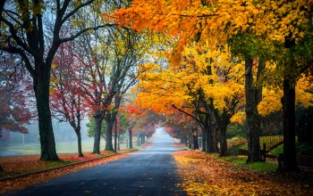 trees,path,park,fall,autumn,leaves,Road,walk,colorful,colors,forest