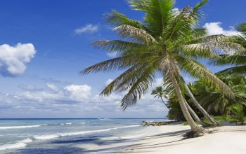beach,vacation,summer,sunshine,tropical,paradise,palms,ocean