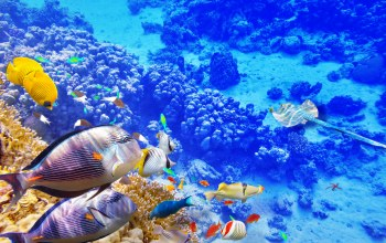 подводный мир,reef,fishes,underwater,ocean,World,coral,tropical