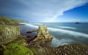 Muriwai beach,auckland,new zealand,australasian gannet colony