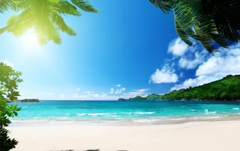 ocean,palms,vacation,paradise,tropical,sunshine,beach,summer