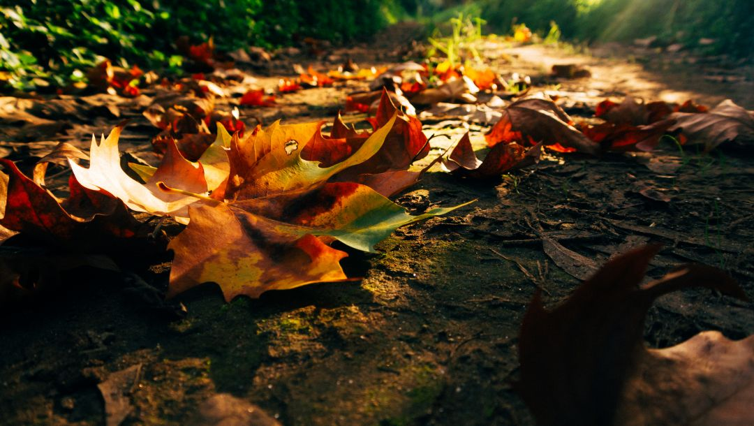 colorful,leaves,forest,Road,trees,park,colors,fall,Sunset,sunrise,path,autumn