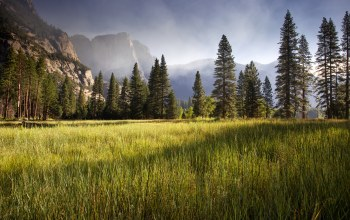 meadow,early morning,yosemite valley