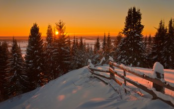 firs,snow,sunrise,landscape,winter