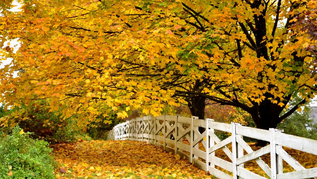 trees,walk,leaves,colors,park,fall,Road,autumn,path,forest,colorful