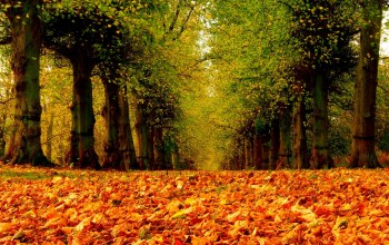 park,leaves,walk,forest,fall,Road,path,trees,autumn,colorful,colors