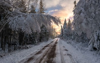 winter,Road,snow,trees