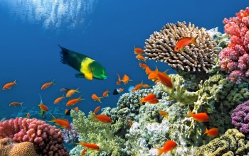 ocean,tropical,coral,reef,fishes,подводный мир,underwater
