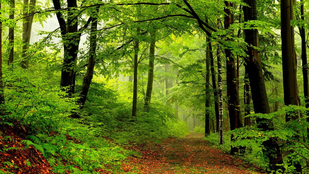 path,trees,forest,park,Road,spring,walk
