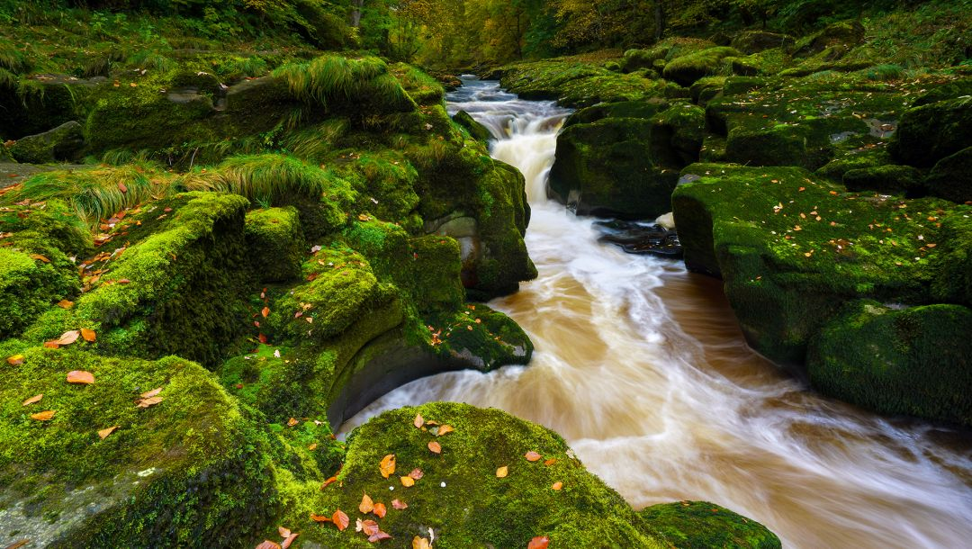 wharfedale,north yorkshire,bolton abbey,england,yorkshire dales,Strid wood,River wharfe