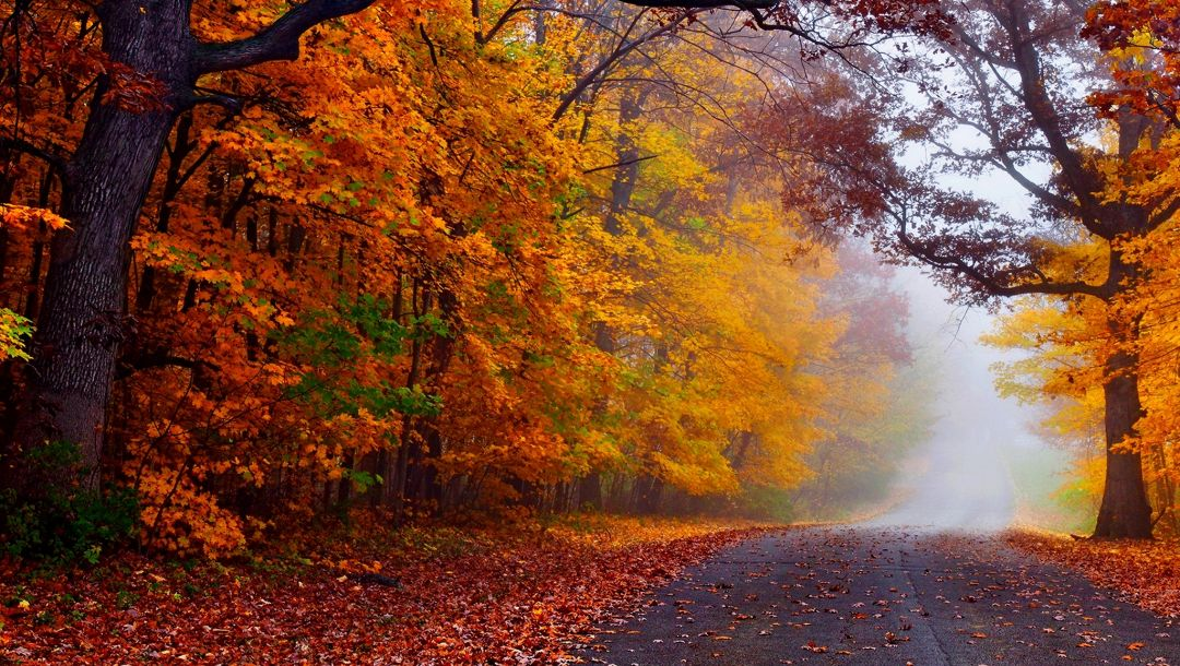 colorful,fall,trees,path,walk,leaves,autumn,Road,colors,forest,park