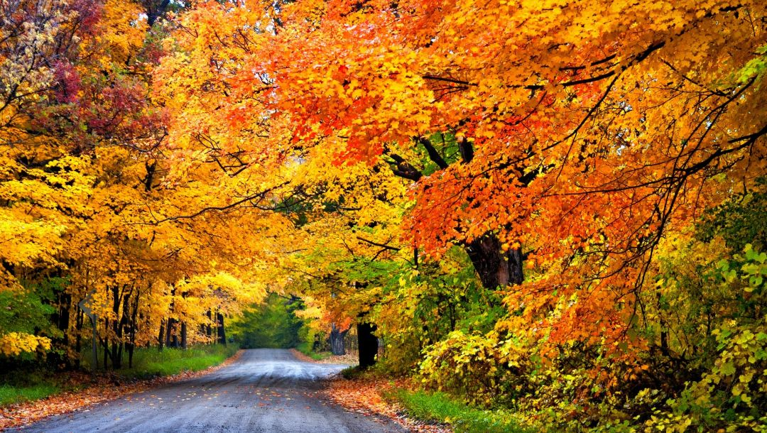 path,fall,walk,leaves,forest,trees,colors,park,colorful,Road,autumn