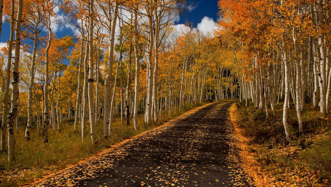 colors,trees,path,colorful,forest,autumn,fall,leaves,Road,walk,park