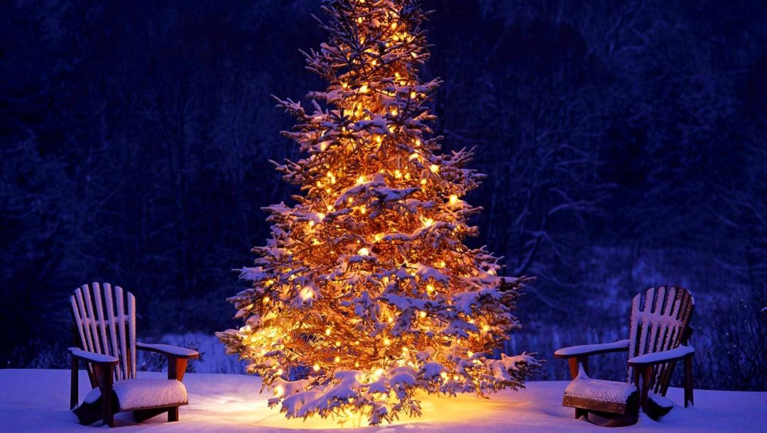 snow,Happy new year,holiday,christmas tree,winter,forest,lights,christmas