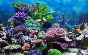 coral,tropical,подводный мир,reef,ocean,underwater,fishes