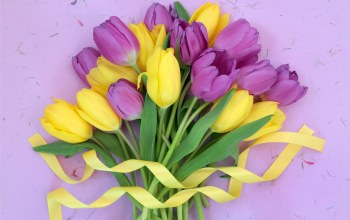 лента,Purple,tulips,yellow,цветы