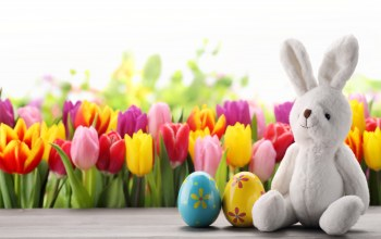 яйца,tulips,цветы,eggs,happy,spring,decoration,Easter