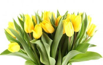 beauty,yellow,bright,яркие,Bouquet,tulips,petals,цветы