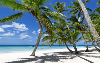 beach,paradise,ocean,sunshine,vacation,summer,palms,tropical