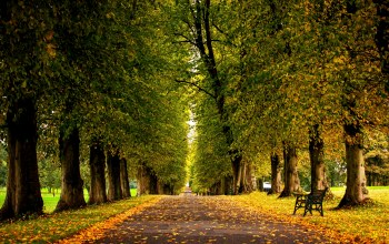 walk,forest,leaves,grass,trees,bench,colors,park,Road,autumn