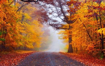 forest,autumn,walk,leaves,park,colorful,fall,Road,path,trees,colors