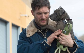 общак,The drop,tom hardy