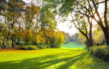Autumn park,sunlight,grass,autumn forest,sunlight,sunbeams,sun rays,forest