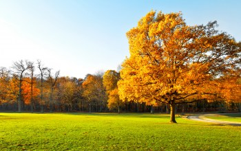 landscape,park,осень,leaves,tree,autumn