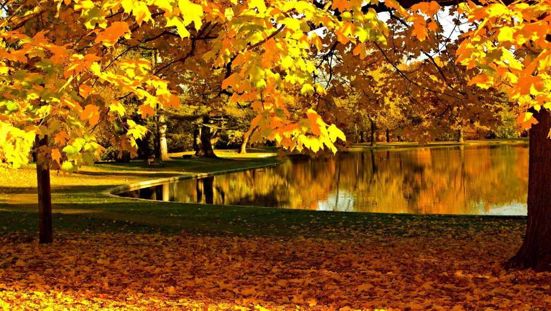 sky,water,forest,river,colorful,fall,leaves,walk,colors,autumn,park,trees