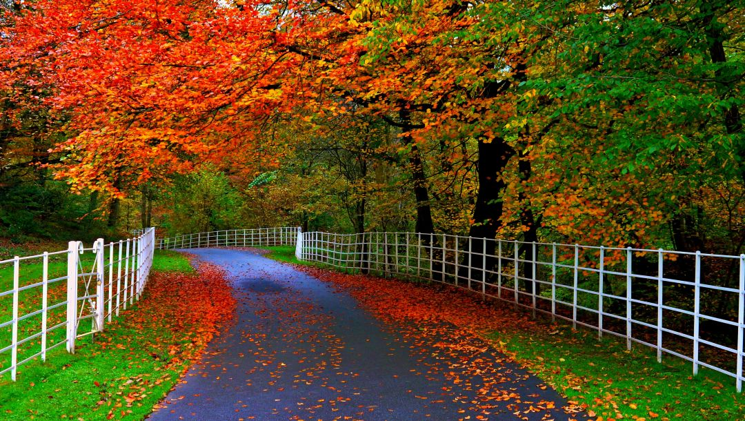 trees,forest,park,leaves,colorful,Road,path,fall,walk,colors,autumn