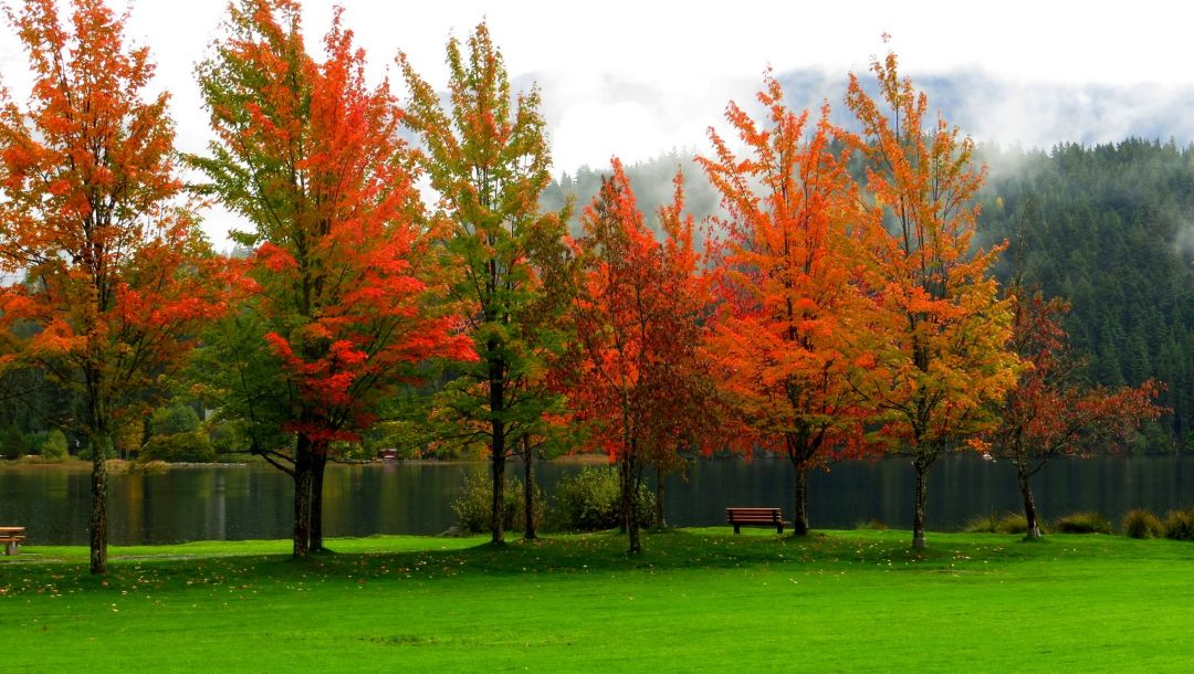 park,river,colorful,fall,trees,walk,water,colors,leaves,forest,autumn,bench