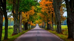 park,autumn,walk,trees,colorful,path,Road,forest,leaves,fall,colors