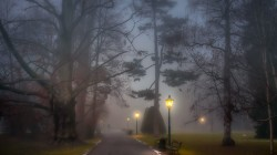 people,park,path,trees,lamp posts,fog,foggy,benches