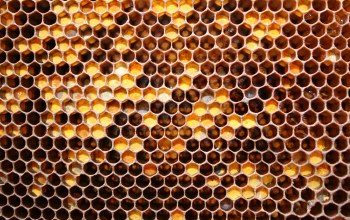 honey,bees,Honeycomb
