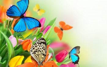 spring,butterflies,colorful,beautiful,tulips,цветы