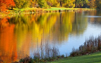 landscape,Autumn park,colorful trees,trees,beautiful scene,reflected