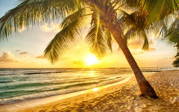 palms,paradise,tropical,Sunset,beach,тропики