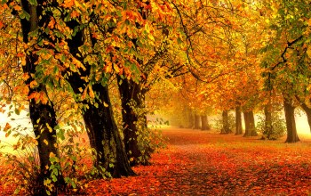 park,path,autumn,trees,colorful,fall,walk,colors,leaves,Road,forest