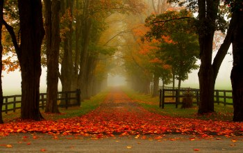 colorful,trees,autumn,Road,forest,park,colors,fall,path,walk,leaves