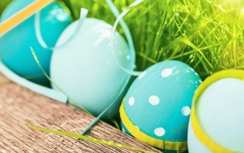 eggs,Easter,happy,decoration,яйца,spring,цветы