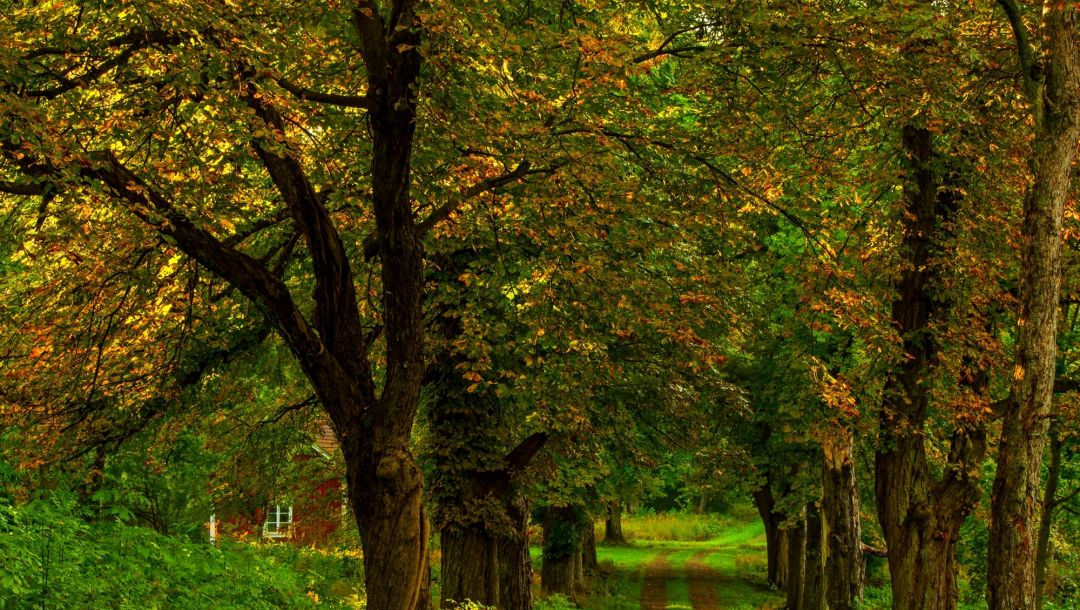 path,fall,leaves,grass,forest,park,trees,autumn,colorful,colors,walk,house,Road