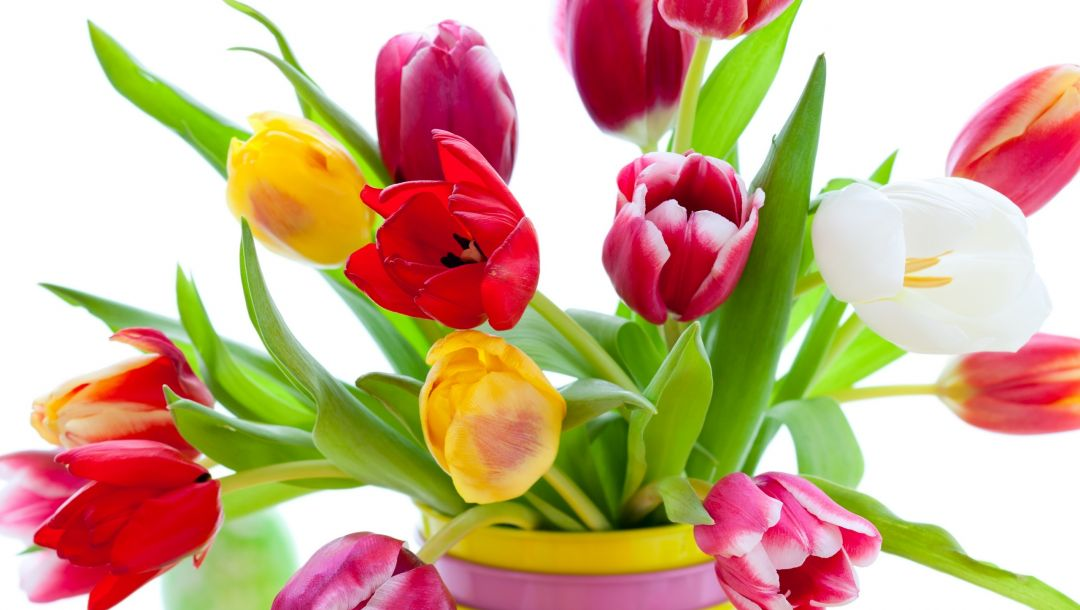 beauty,Bouquet,yellow,vase,petals,Red,White,tulips,bright,varicoloured