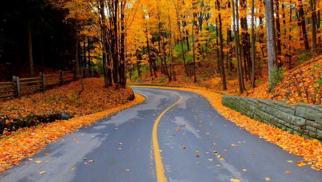 colorful,fall,Road,autumn,trees,colors,walk,leaves,forest,path,park
