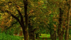 path,nature,fall,leaves,grass,forest,park,trees,autumn,colorful,colors,walk,house,Road