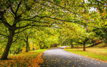 park,trees,fall,path,colorful,Road,leaves,forest,autumn,walk,colors
