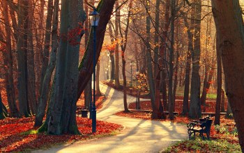 view,trees,bench,fall,park,forest,leaves,walk,alley,autumn